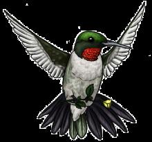 Цветной эскиз колибри