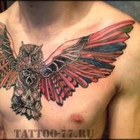 Сова с распахнутыми крыльями на черепе