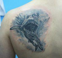 Акула с открытой пастью на лопатке