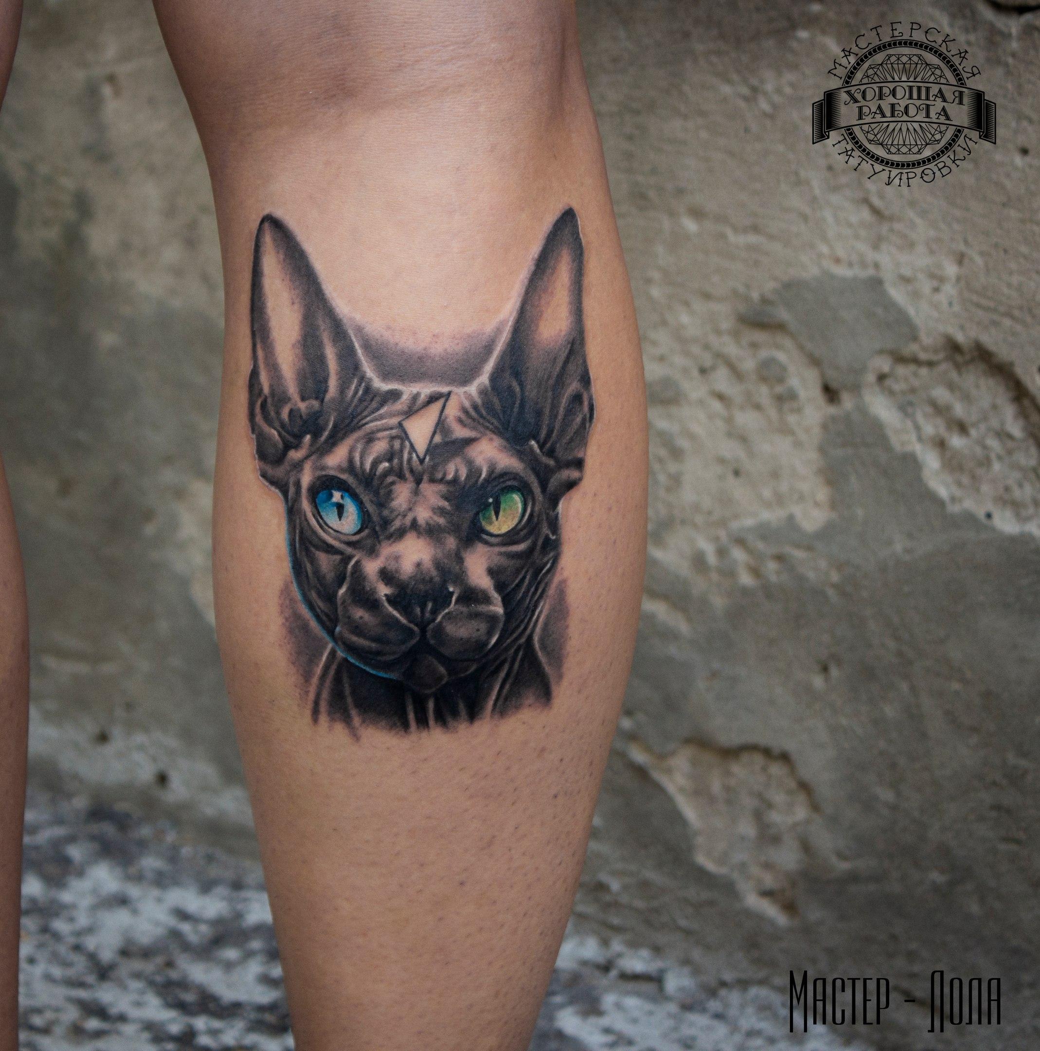 Котик с разноцветными глазами на ноге