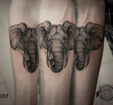 Слон на предплечье