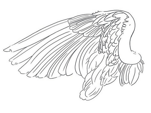 wing-tattoo-sketch